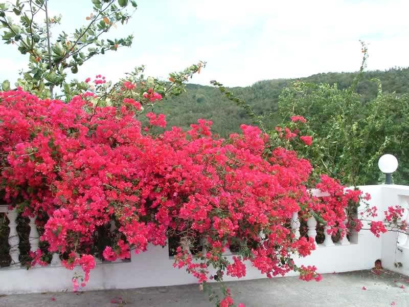 hoa-trong-ban-cong-hoa-giay2